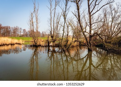 Trees and branches reflected in the mirror smooth water surface of a creek in the Dutch National Park Biesbosch, Werkendam, North Brabant.