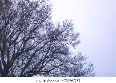 trees branches in the sky background