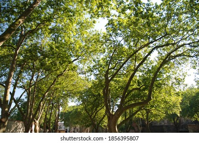 Trees With Branches Stretching Out To The Sky