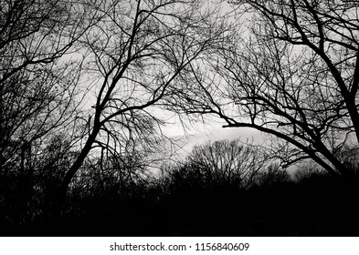Trees branches void of their leaves cross each other on a lonely winter evening.