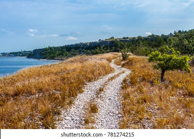 Trees and bright dry yellow grass on seaside cliff. Beautiful view of coast on Gotland, island in Baltic Sea in Sweden.  Blue sky and rocks on the background.  Road made of pebbles going along shore.