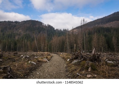 Trees broken by the wind on the trail to Kopieniec Wielki in Tatra mountains, Malopolskie, Poland