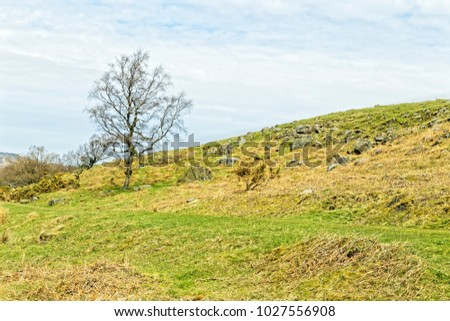 Trees and bushes grow on the slope of a hillside dotted wih rocky outcrops