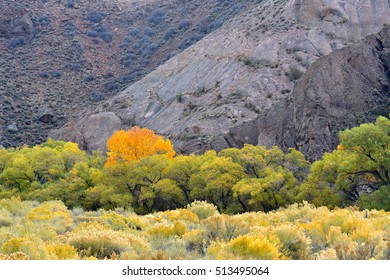 Trees and bushes in lovely fall colors at the base of a desert mountain
