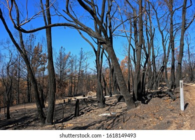 Trees and bushland burnt during ferocious bushfire in the Adelaide Hills, South Australia in December 2019.
