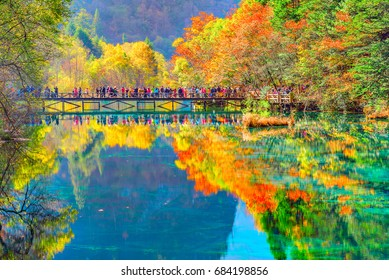 Trees by the colorful lake at autumn day time. Jiuzhaigou nature reserve, Jiuzhai Valley National Park, China.