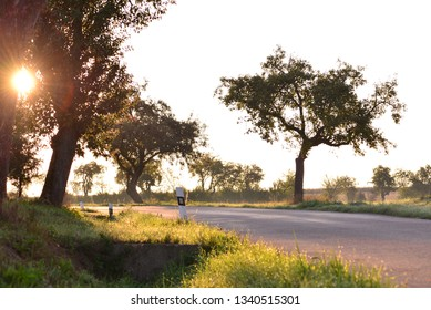 Trees by the road in morning sunshine.