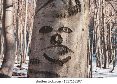 Trees can see. They have also eyes and faces. Beech tree with natural face.