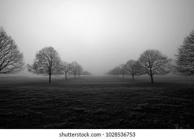 Trees captured on a cold misty morning in winter. Northamptonshire