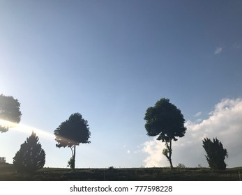 Trees with the clear blue sky