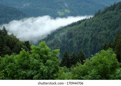 Trees in cloud