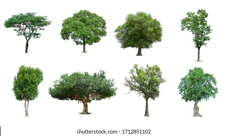 Trees collection  isolated  on white background.