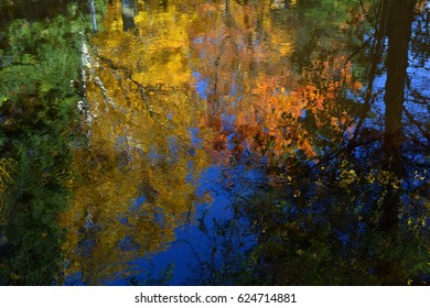 Trees with colorful leaves reflecting in a body of water giving the appearance of an abstract painting.