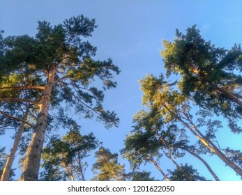 Trees conifers and deciduous trees below the sky clean environmentally friendly