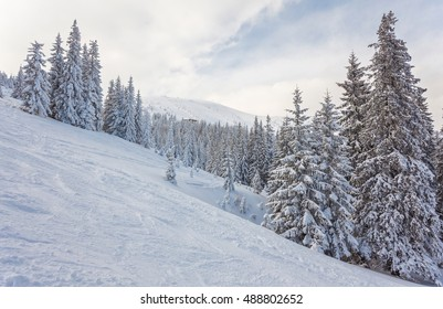 trees covered by snow on mountain hill. natural winter background