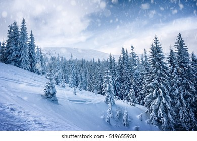 trees covered by snow on mountaine hill. winter background