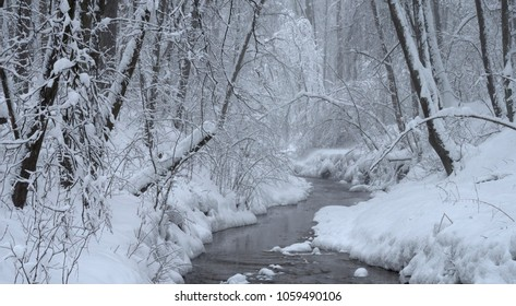 Trees covered with fresh snow in a cold and snowy winter day, and small forest river