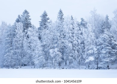 Trees covered in frost snow nature winter scene