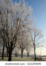 Trees Covered in Hoar Frost at the Harbour on the Lake in Senftenberg, Lausitz, Brandenburg, Germany on a Sunny Winter Day