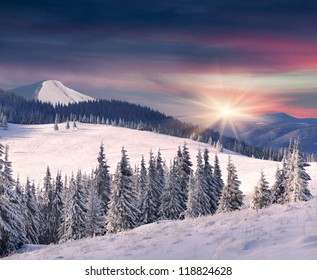 Trees covered with hoarfrost and snow in mountains. Sunrise