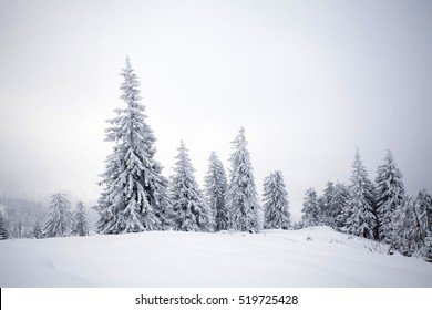 Trees covered with hoarfrost and snow in winter mountains - Christmas snowy background