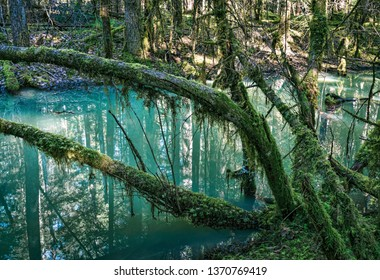 Trees covered in moss overhanging blue water of a forest pond.