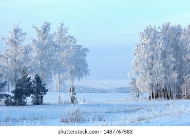 Trees covered with rime, a bright sunny day