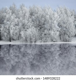 Trees covered in rime frost on blue sky, reflected in ice