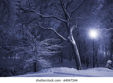 Trees covered with snow, dark sky and shining lantern. Park scene. Night shot.