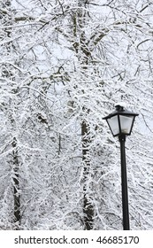 trees covered with snow during winter storm