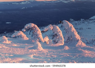 Trees covered with snow in the mountains after an extremely heavy snowfall