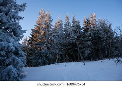 Trees covered in snow in the mountians during sunrise - a winter hike in Babia Góra National Park, Poland (Drzewa pokryte śniegiem w górach, wschód słońca na wędrówce w Babiogórskim PN) - Shutterstock ID 1680476734