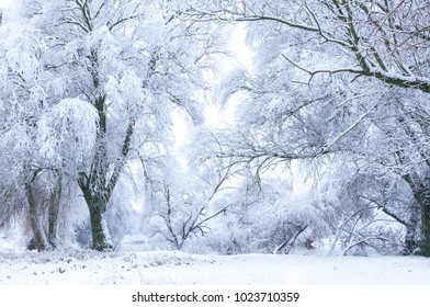 Trees covered with snow. Nature in winter season