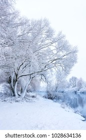Trees covered with snow on bank of winter river