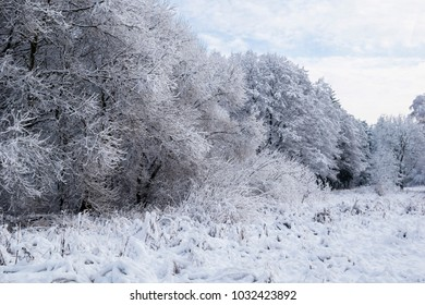 trees covered with snow on a cloudy day in winter