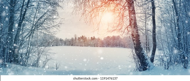 trees covered with snow on frosty evening. Beautiful winter panorama