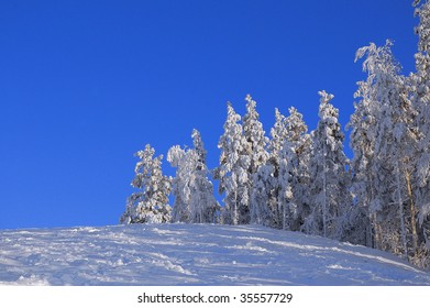 trees covered with snow on sunny winter day