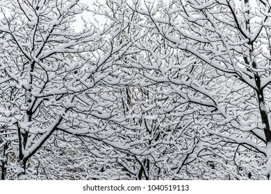 Trees covered in snow in Paris, France