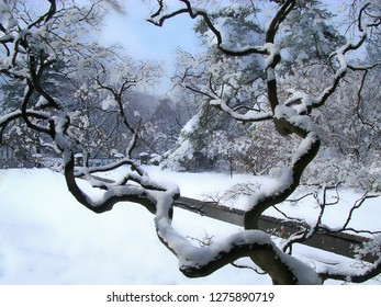 Trees covered with snow in park.