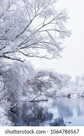 Trees covered with snow in winter season