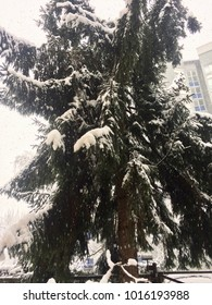 Trees covered in a thick layer of snow