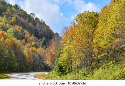 Trees, covered with yellow and scarlet leaves, high in the mountains. Autumn scene.