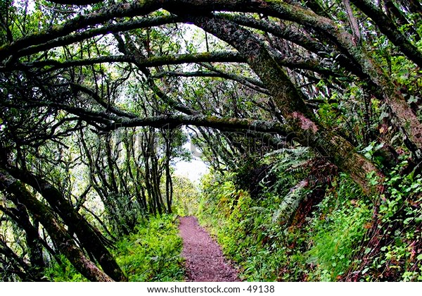 Trees covering hiking trail