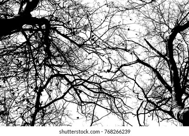 Trees crossed branches silhouette foliage