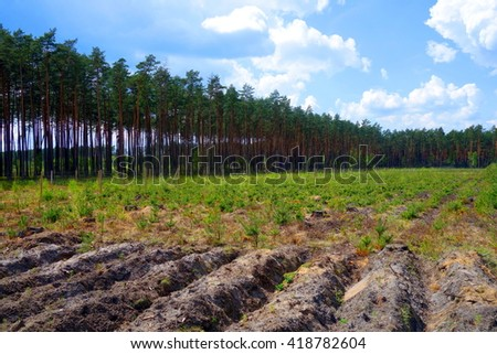Trees Cultivation Forest Stock Photo (Edit Now) 418782604 - Shutterstock