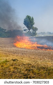 Trees in danger Close to a Wheat field in flames Blackened and completely burnt