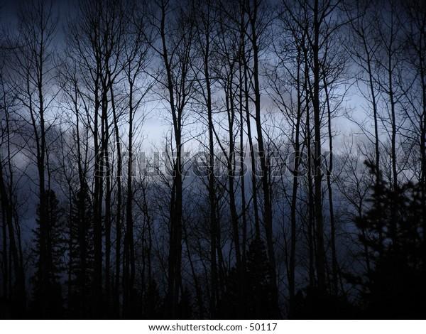 Trees at Dark