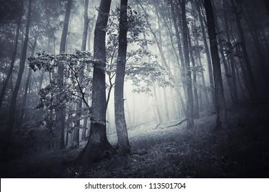 trees in dark forest