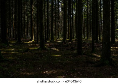 trees in a dark forest with spots of light that fall through the leaves on the ground