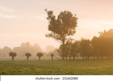 Trees at dawn
